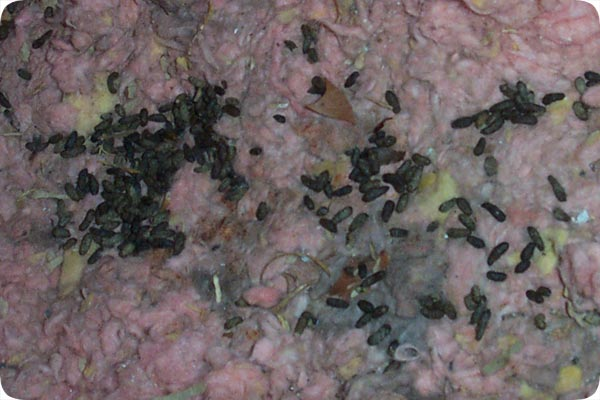 Photos Of Rat Droppings Poop And Feces Contamination
