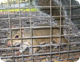 Orlando Squirrel Control Company
