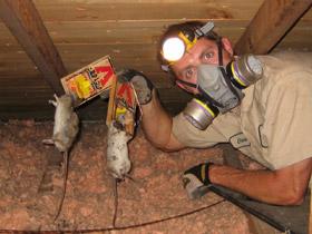 Mice problem in garage