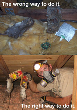 How To Kill Rats Permanently